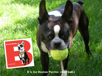 B is for Boston Terrier, a book about Buck written and illustrated by Sarah Tregay
